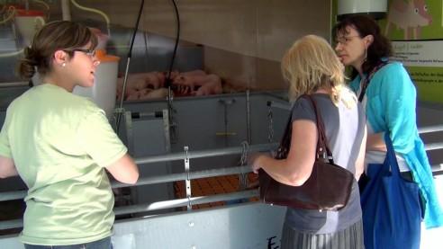 Das Schweine-Mobil auf dem Hessentag 2014