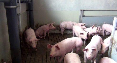 WLV fordert Hilfe bei der Umstrukturierung der Nutztierhaltung
