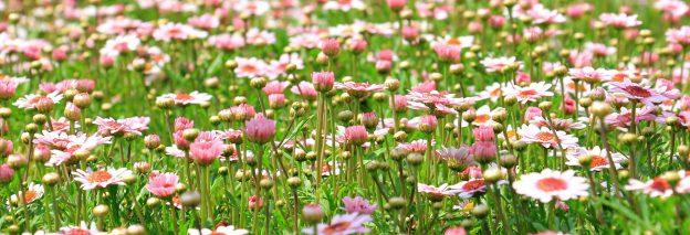 Blühstreifen im Feld sollen den Pestizideinsatz vermindern helfen