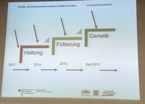 Ringelschwanz in der Praxis: Was geht und was nicht #Expertise2018