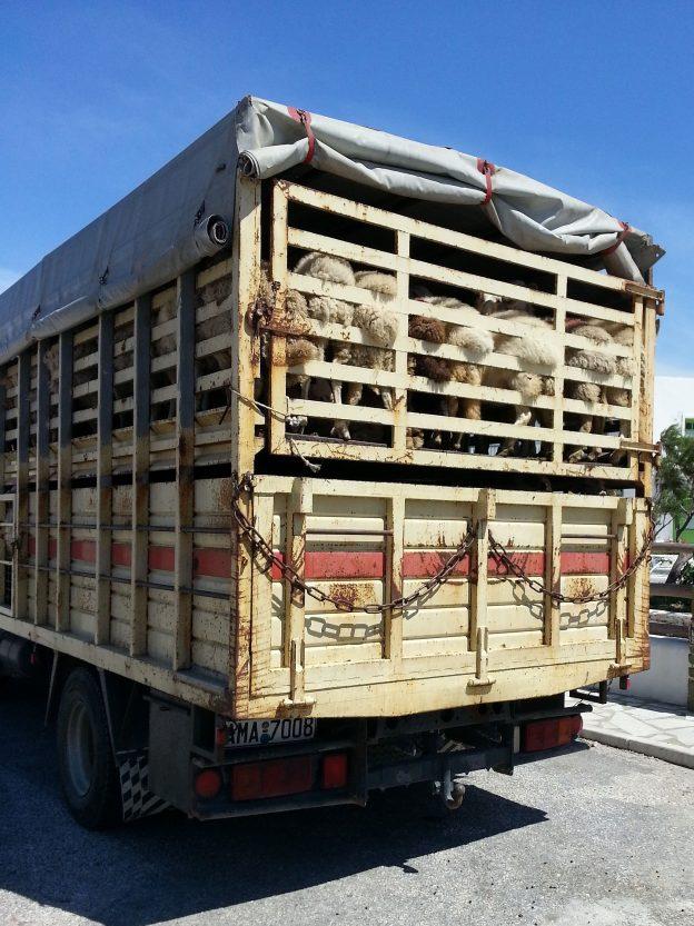 Agrarministerkonferenz fasst Beschluss zu Transporten in Nicht-EU-Länder