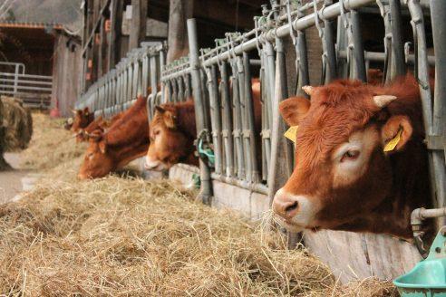 Niedersachsen gibt Brachen für Futterzwecke frei
