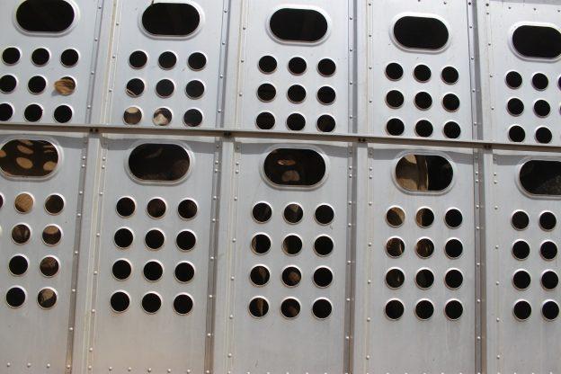 Tiertransporte bei Hitze: Bundesagrarministerium verschärft Regelungen